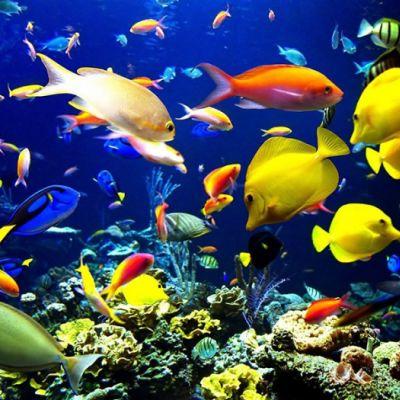 Instalación rápida de un acuario
