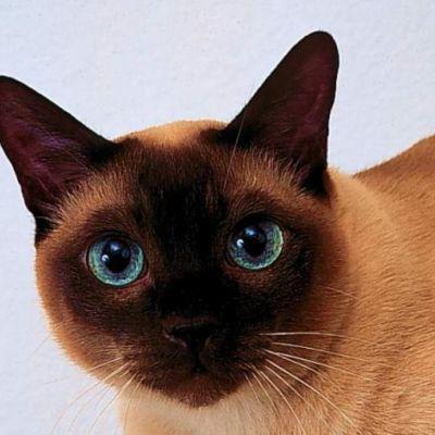 Gato Thai