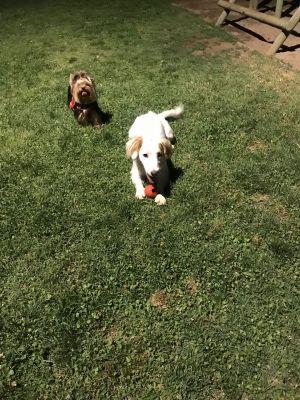 Jugando con su amiga Coca